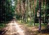 11_k-droga_w_lesie_1